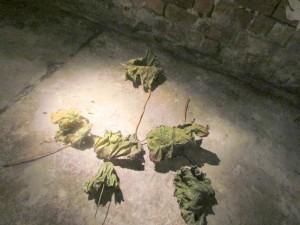Installat. Blätter (Ausschnitt), Kunstlicht - Velten, 2012, gewachste Blätter