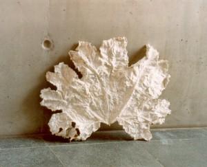 Blatt, ummantelt in Weiß